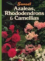 Azaleas, Rhododendrons & Camellias