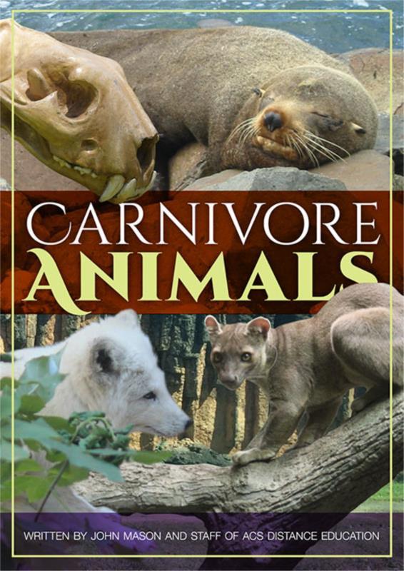 Carnivore Animals - PDF ebook