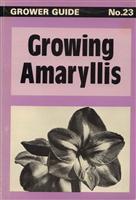 Growing Amaryllis