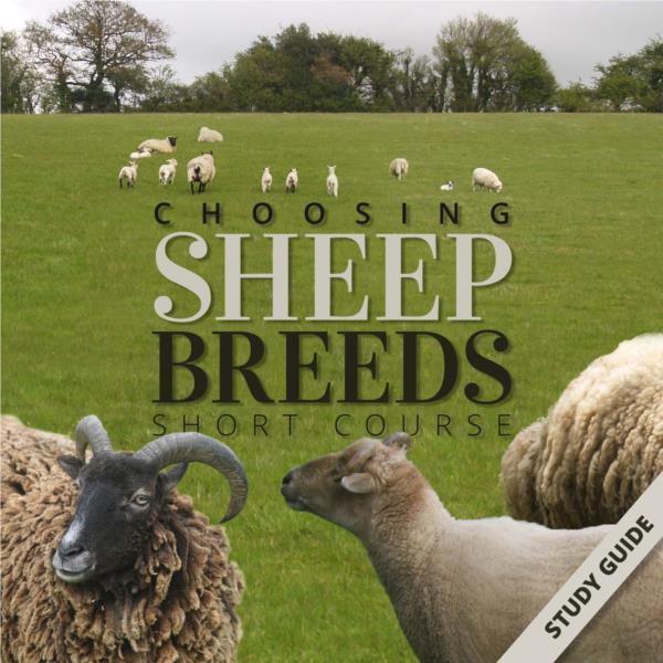 Sheep Breeds- Short Course